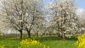Fruchtobstgarten Lizenzfreies Stockfoto