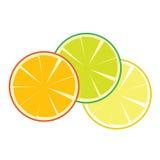 Fruchtorangenvektor Lizenzfreies Stockfoto