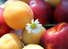 Fruchtsaft-Frühstückstageslicht Stockfotos