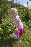 Fruchtsammeln des jungen Mädchens Stockfotos