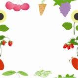 Fruchtset Lizenzfreie Stockbilder