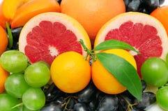 Fruchtset Stockbilder
