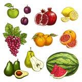 Fruchtskizze der frischen süßen Beere für Lebensmitteldesign vektor abbildung