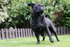 Frug dog sat on grass landscape Stock Photos