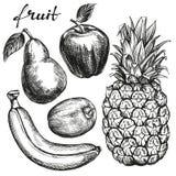 Frui set pear, apple, banana, kiwi, pineapple hand drawn vector sketch Stock Photos