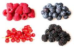 Fruit à baie, fraise, mûre, myrtille, groseille rouge, framboise, cassis Photographie stock