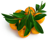 Fruit. Tangerines isolated on white for your design Stock Photos