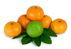 Fruit. Tangerines isolated on white for your design Royalty Free Stock Photo