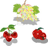 Fruit. Royalty Free Stock Images