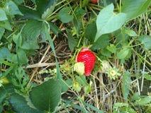 fruit Image stock