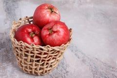 Fruit Acmella oleracea (jambu, toothache plant, paracress, elect Stock Image