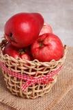 Fruit Acmella oleracea (jambu, toothache plant, paracress, elect Royalty Free Stock Image