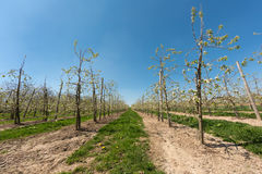 Fruit agriculture Royalty Free Stock Photos