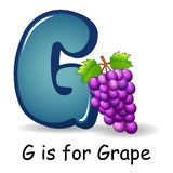 Fruit alphabet: G is for Grape Stock Photo