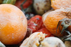 Free Fruit And Vegetable Compost Stock Images - 8660554