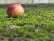Fruit anonyme photographie stock libre de droits