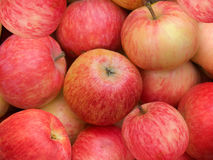 Fruit apples Stock Image