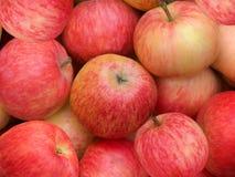 Fruit apples Stock Image