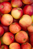 Fruit  apples  fresh Stock Image