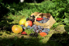 Fruit. apples. plums. Fruit in a basket in the grass. Apples, plums Stock Photo