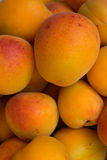 Fruit  apricots  fresh Stock Images