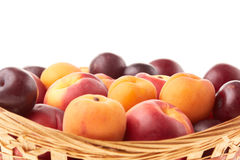Fruit. Apricots, nectarines and plums. Royalty Free Stock Images