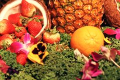 Fruit arrangement. With pineapple, strawberries and coconuts Stock Photography