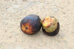 Fruit of Asian Palmyra palm Stock Image