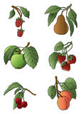 Fruit Assortment. Vector art in Illustrator 8. An assortment of hand drawn fruit Royalty Free Stock Photos