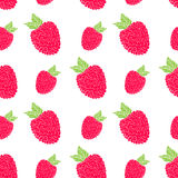 Fruit background Seamless pattern with hand drawn skech raspberry vector illustration Stock Image