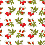Fruit background Seamless pattern with hand drawn sketch rose hip vector illustration Royalty Free Stock Image