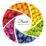 Fruit backgrounds