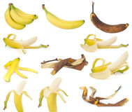 Fruit, Bananas. Bananas at various ripeness stages Stock Photos
