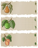 Fruit Banners APP. Vector art in Illustrator 8. Three delicious fruits hand drawn in a loose graphic style on a torn paper banner. All elements on separate Stock Photography