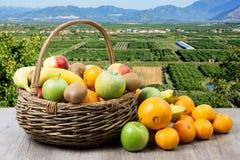 Fruit basket in crops Stock Image