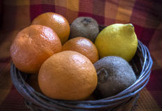 Fruit Basket. A basket filled with citruses Stock Photography