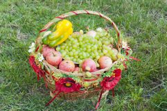 Fruit basket. On the grass Royalty Free Stock Photo