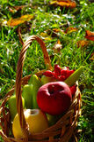 Fruit Basket In The Grass Stock Images