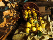Fruit basket of pears quince apples on a background of wood Stock Photos