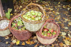 Fruit baskets apples Stock Images