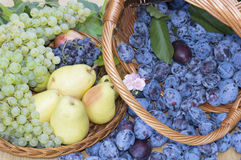 Fruit baskets. Fresh plums, grapes and pears in wooden baskets Royalty Free Stock Photos