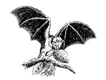 Fruit bat. This is my hand drawing . Fruit bats are believed to carry and spread the Ebola virus Royalty Free Stock Photo