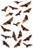 Fruit bats (flying foxes) composite Royalty Free Stock Images