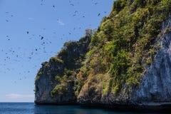 Fruit Bats Flying Near Island Stock Images