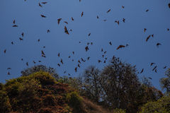 Fruit Bats Over Tropical Island Royalty Free Stock Image