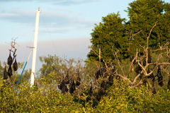 Fruit bats and yacht mast Stock Photos