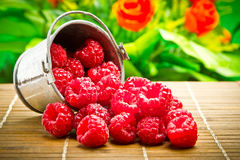 Fruit berries in metal small pail Stock Photography