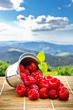 Fruit berries in metal small pail Royalty Free Stock Images