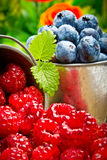 Fruit berries in metal small pail Royalty Free Stock Photography