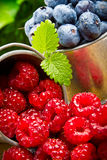 Fruit berries in metal small pail Stock Photo